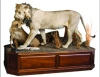 Cordier TAXIDERMY AUCTION