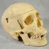 """William Bunch Auctions """"ODDITORIUM"""" Día de los Muertos"""