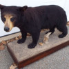 George S. Foster WOOD CARVINGS & ANIMAL MOUNTS AUCTION