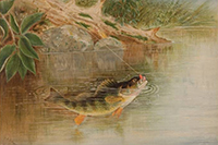 "Gone Fishing: ""Fish Stories"" At Crystal Bridges Museum"
