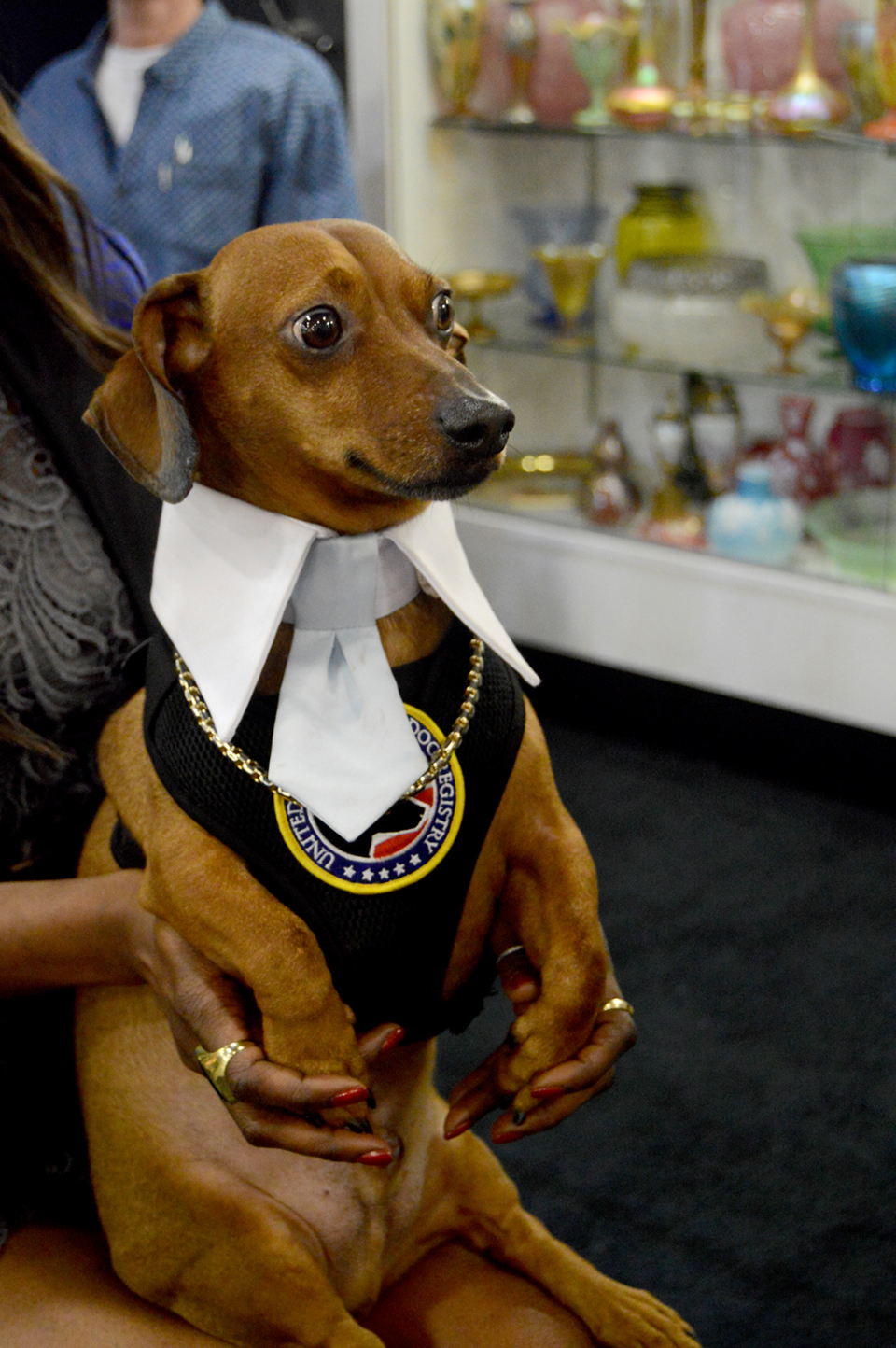 Peanut, age 11, was dressed to the nines on opening day,<br>The Emporium, Great Barrington, Mass.