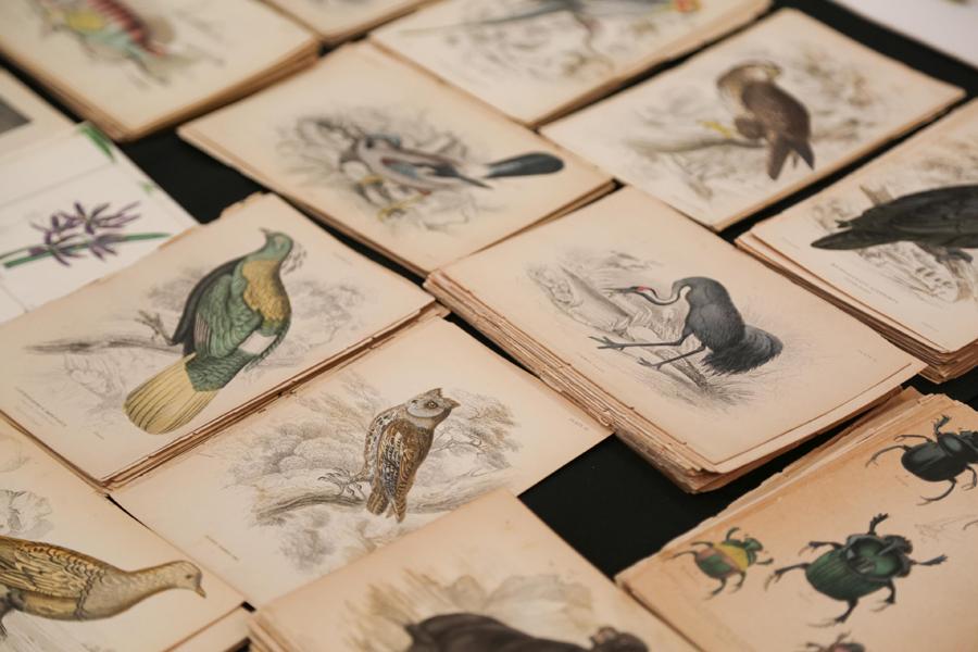 Botanical, landscape and Audubon prints and more<br>were at Lynne Ward Prints, Norwalk, Conn.
