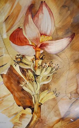 """""""Banana Flower"""" by Dorothea Warren O'Hara (1873–1972)."""