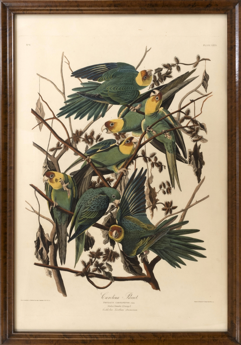 """Carolina Parrot,"" elephant folio print by John J. Audubon. Engraved, printed and colored by Robert Havell, with Whatman watermark, $78,000."