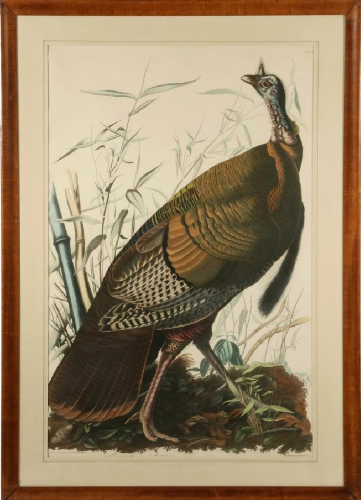 "Plate I, ""Wild Turkey, Male"" from Audubon's Birds of America (shown) sold for $46,800 even though was trimmed on one side. Its mate, Plate VI, ""American Hen and Young,"" sold separately, bringing $36,270. Both were double elephant folios from the first London edition and together, were the highest priced items in the three-day sale."