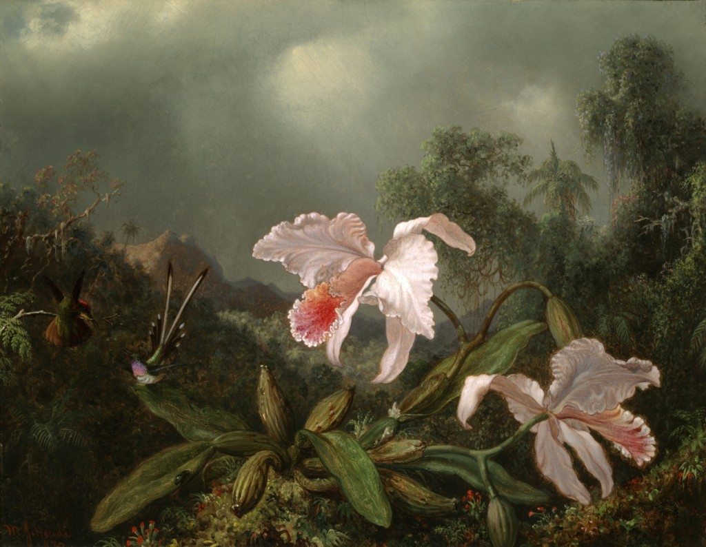 """Jungle Orchids and Hummingbirds"" by Martin Johnson Heade (1819–1904), 1872. Oil on canvas, 18¼ by 23 inches. Yale University Art Gallery, Christian A. Zabriskie and Francis P. Garvan, BA, 1897, MA (Hon.) 1922, Funds."