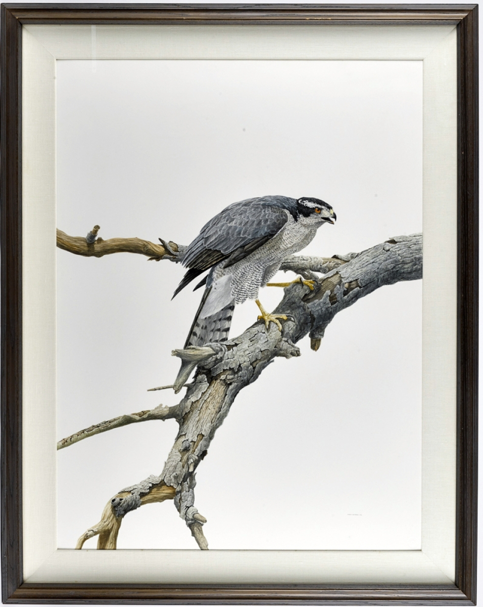 "Anthony Henneberg (American, b 1966), ""Hawk,"" watercolor and gouache of a hawk, went out at $4,392."