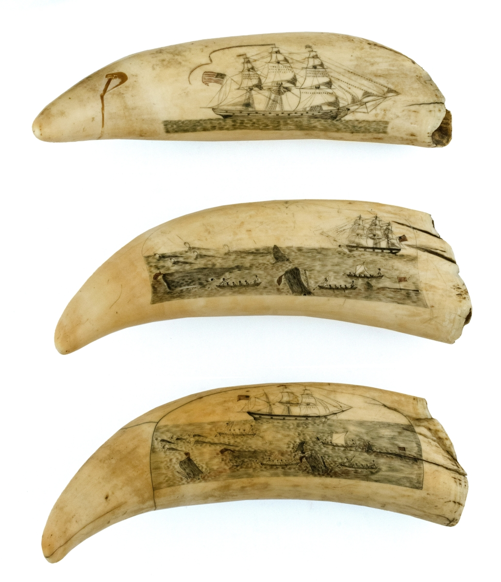 "Attributed to the ""Arch Engraver,"" these three teeth achieved the second highest price of the sale, $240,000. The teeth are from the same jawbone and the scenes on them correlate with one another. They depict closeup views of whales being captured, detailed images of whaleboats and their crews, an American flagged whaleship, etc. From the Mittler collection, the teeth, were discovered individually and assembled as a set for the first time in this collection."