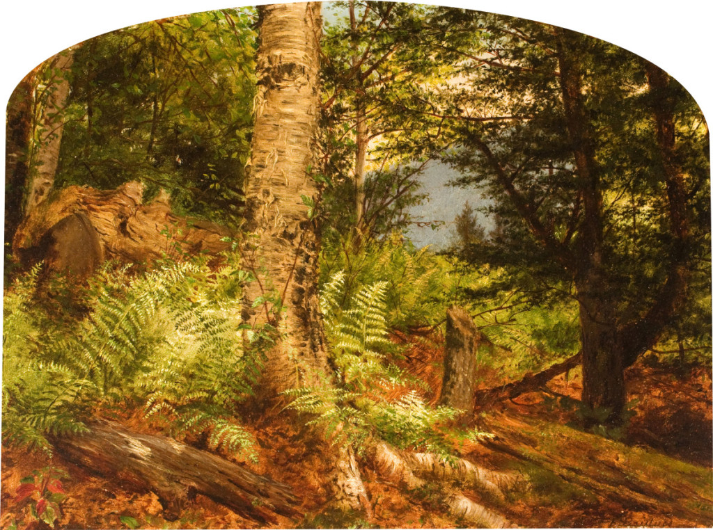 """""""Study of Ferns"""" by Fidelia Bridges, 1864. Oil on board, 10 by 12 inches. New Britain Museum of American Art, Gift of Jean E. Taylor."""