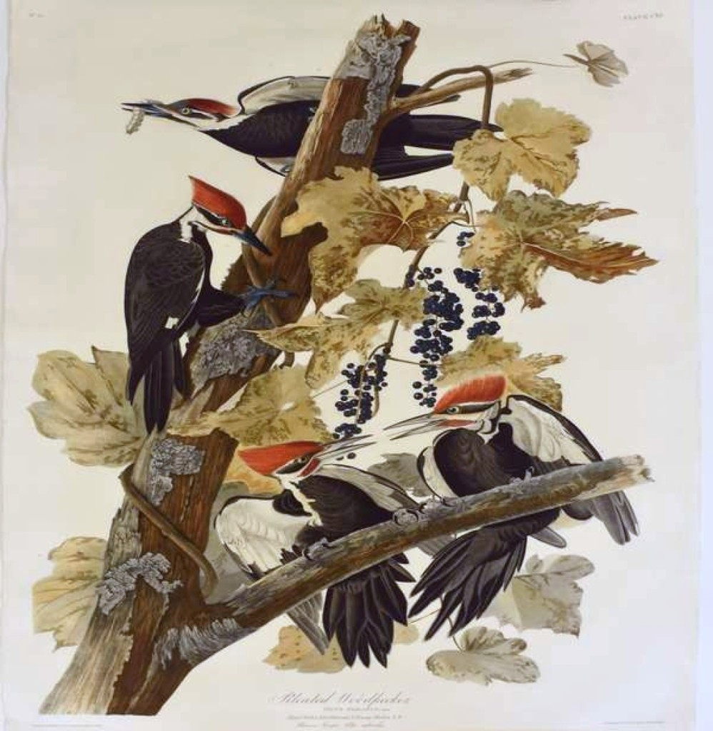 """Only 186 sets of The Birds of America were printed by Robert Havell, and most of those are museums and libraries. Plate number CXI, """"The Pileated Woodpecker,"""" was the highest priced item in the sale, realizing $23,000."""