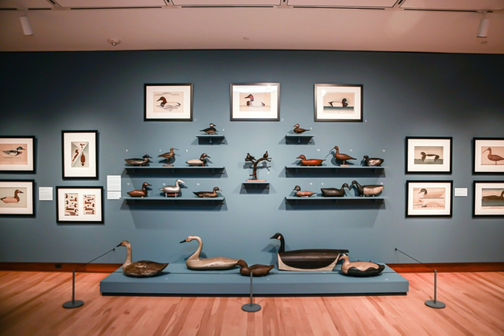 """Display of various decoys in the gallery at Shelburne Museum where the exhibition """"Joel Barber & the Modern Decoy"""" is on view through January 12, 2020. Image courtesy Shelburne Museum."""