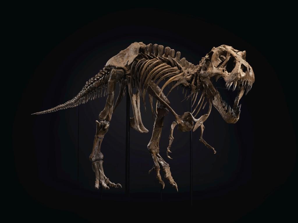 2020_NYR_19872_0059_000(tyrannosaurus_rex_south_dakota_usa041734)