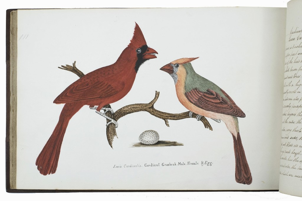 Got a bird-lover on your gift list? The cardinal depicted here caught the eye and what would be more appropriate than an album featuring 71 original watercolors of 81 birds after the birds of Alexander Wilson's American Ornithology copied by Thomas Howitt, with manuscript captions, published in England in 1827. Asher Rare Books was offering this oblong quarto with gold-tooled spine, gold fillets on the boards, brown cloth sides and marbled endpapers, in a brown linen box with black morocco spine with gold letters, for $41,500. Goy, The Netherlands.