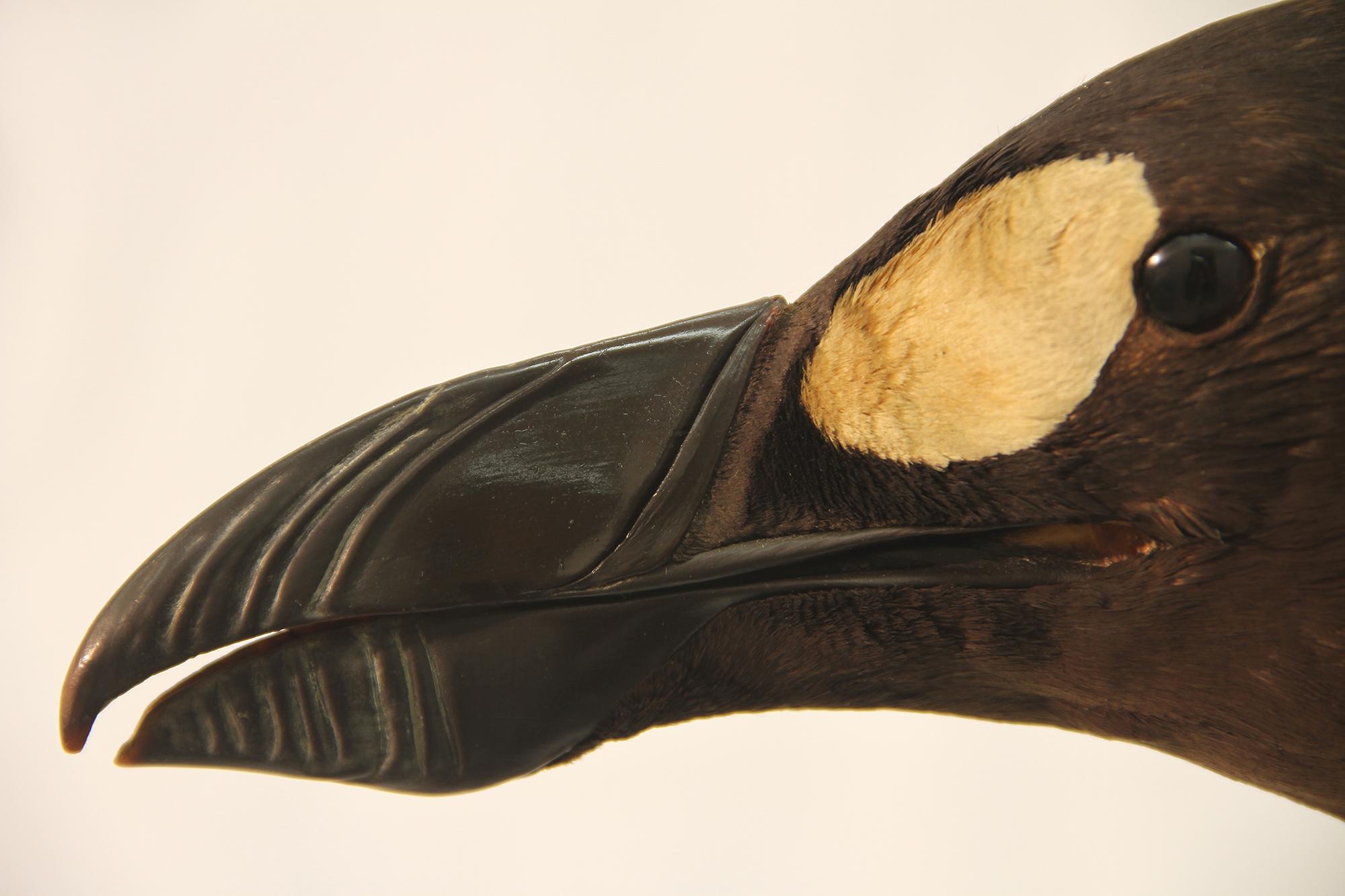 """Beak"" by Todd McGrain. Photograph. Lent by the artist."