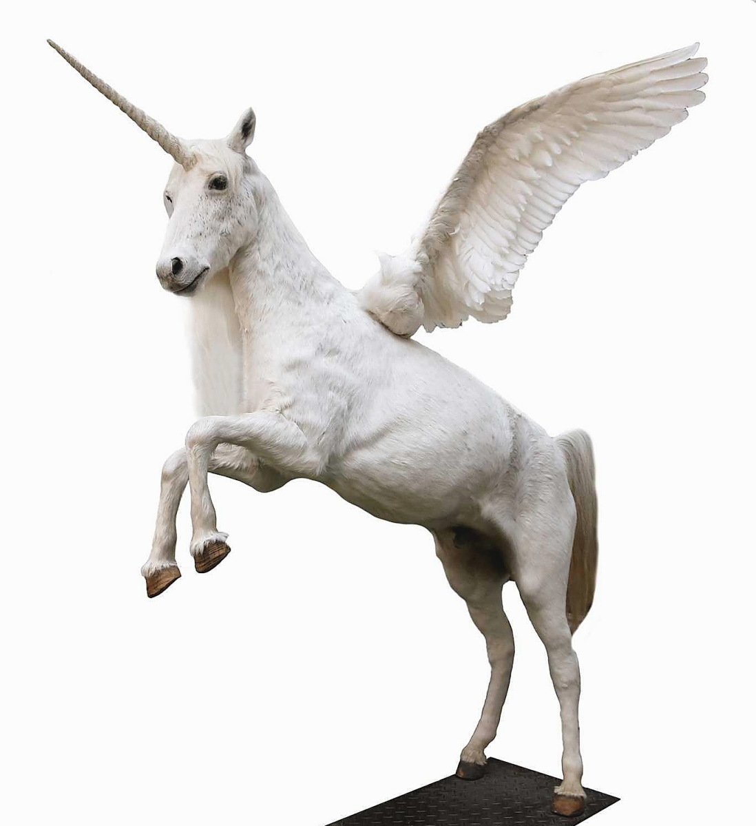 """""""It was an immense item and the absolute star of the show,"""" Mark Wilkinson said of the taxidermy alicorn that soared to sell to a Polish private collector who prevailed against other international bidders to bag it for $11,900."""