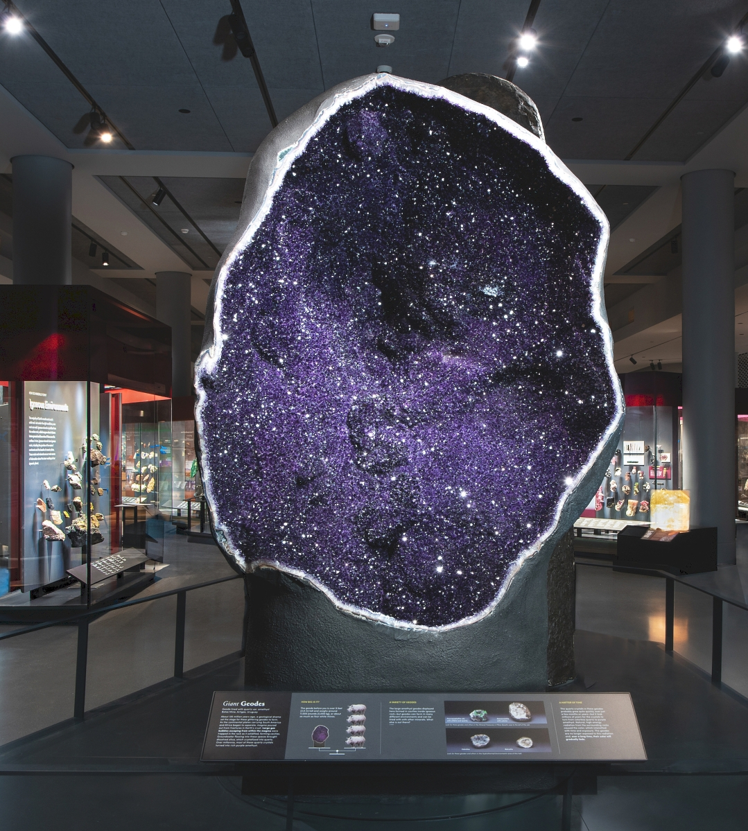 The entrance to the new galleries features a pair of towering amethyst geodes that are among the world's largest on display. The amethyst geode pictured here stands 9 feet tall, weighs around 12,000 pounds (5,440 kg), or about as much as four black rhinos, and was collected from the Bolsa Mine in Uruguay. D. Finnin/©AMNH.